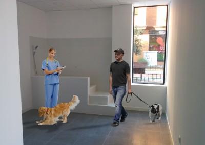 reforma clinica veterinaria